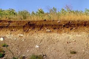 Что делать с грунтовыми водами на участке